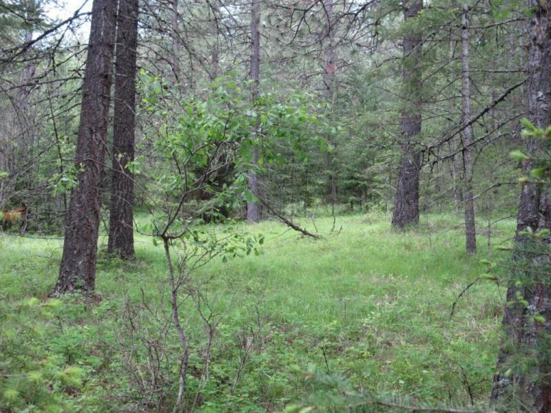 Nna Lodge Pole Ln., Elk, WA - USA (photo 1)