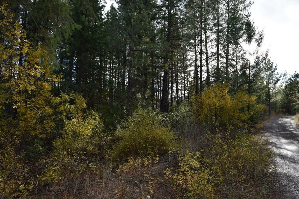 567 Juneberry Ln Meacham Rd, Leavenworth, WA - USA (photo 5)