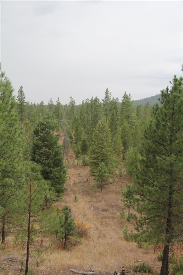 Lot 3 Woods Way, Springdale, WA - USA (photo 5)