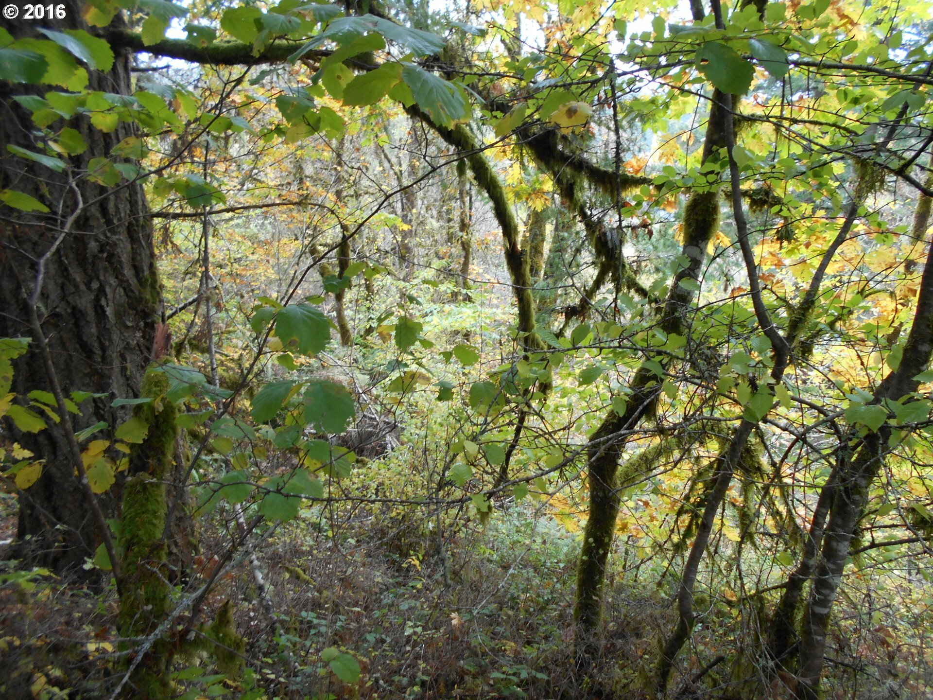 39525 Sw Fort Hill Rd, Willamina, OR - USA (photo 3)