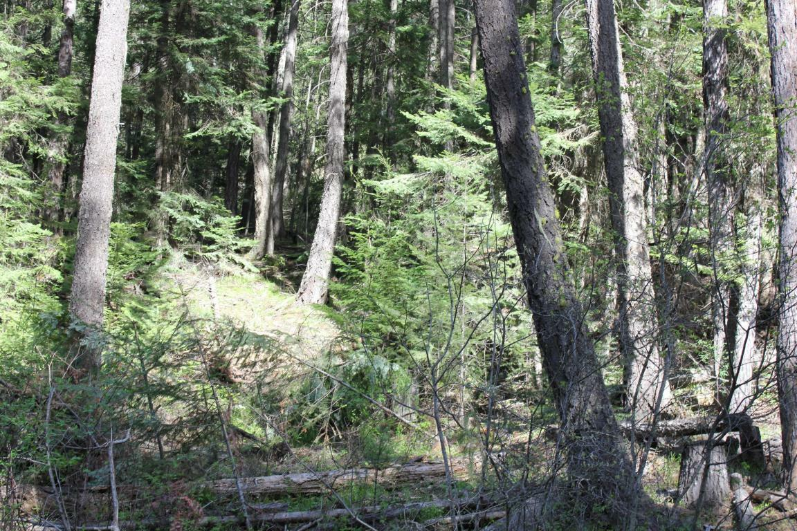 Nna Conkling Park Lot 4 And 5 Blk, Worley, ID - USA (photo 1)