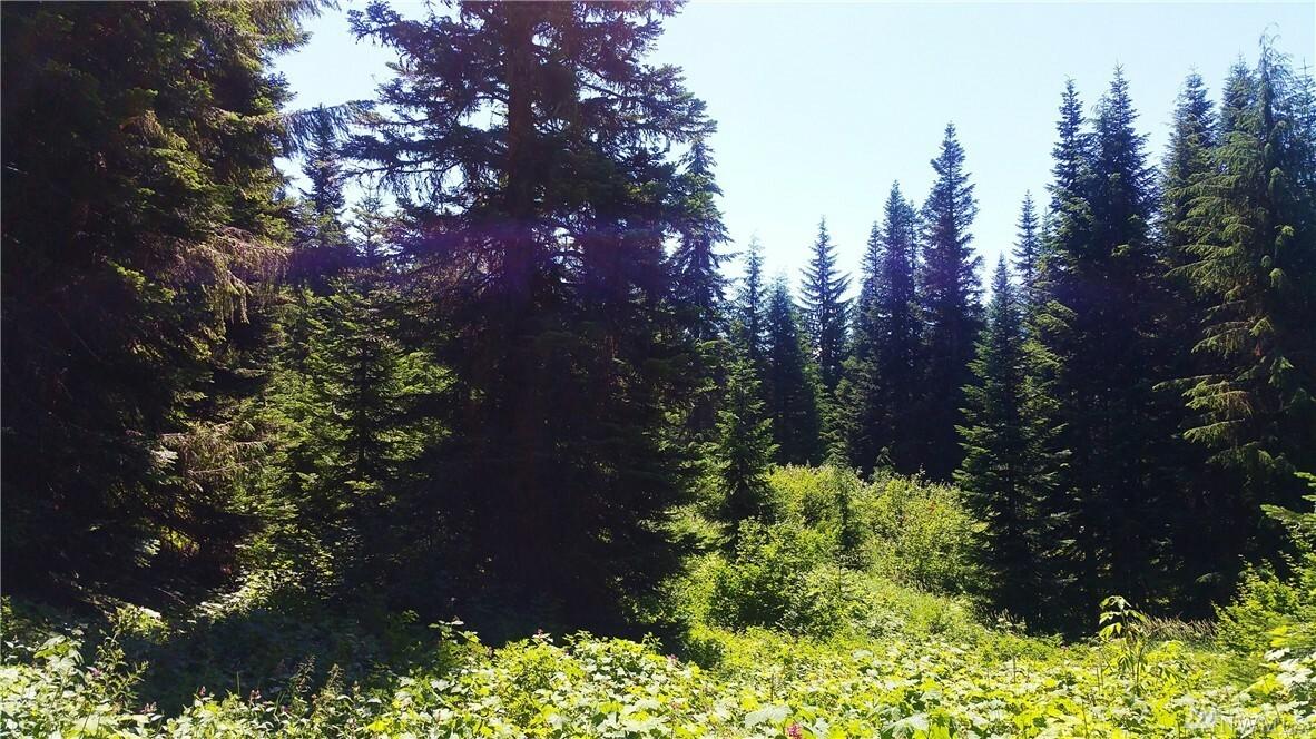 0 Huckleberry Peak Rd, Snoqualmie Pass, WA - USA (photo 5)