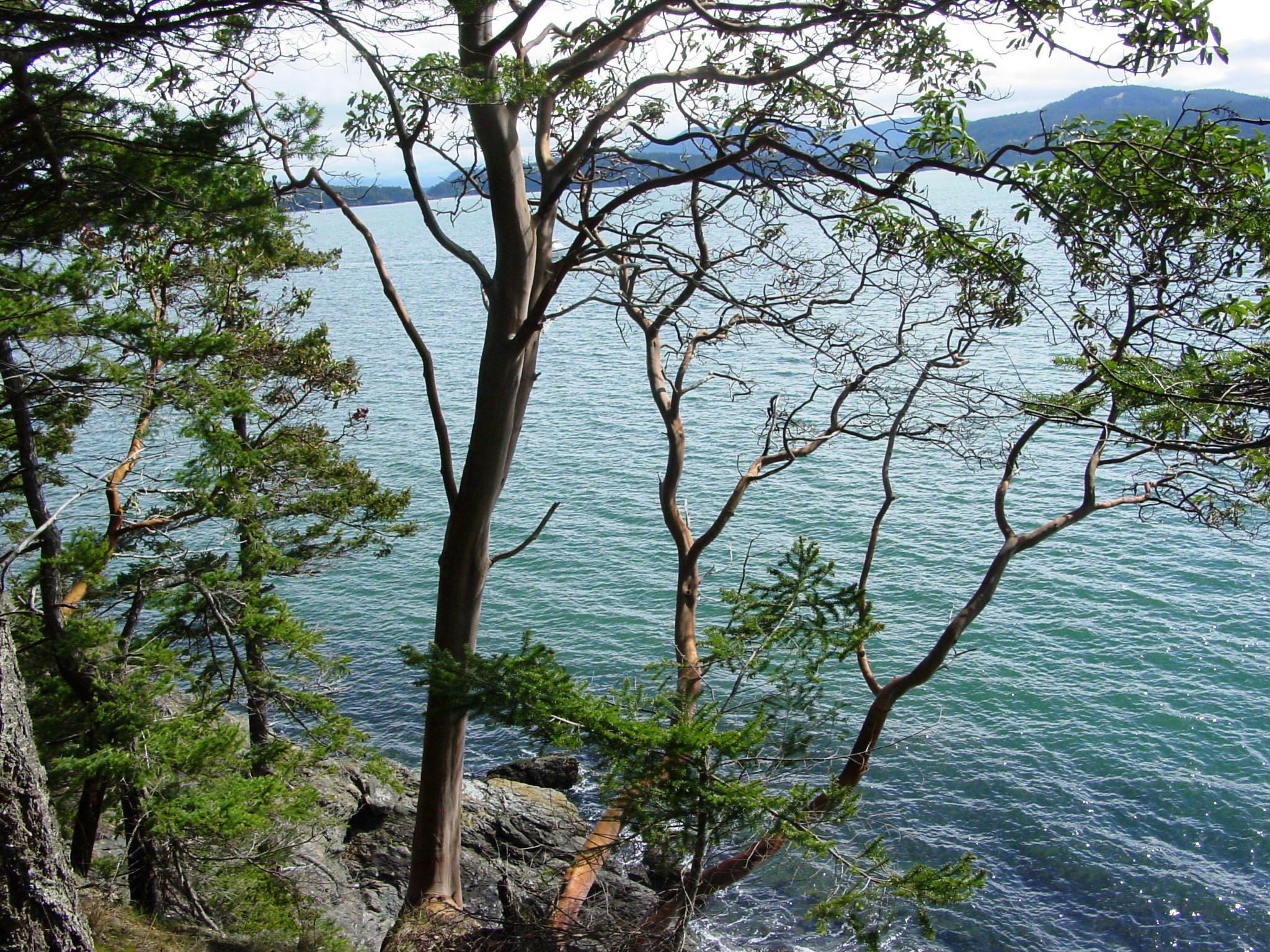 0 rebe road, orcas island (photo 4)