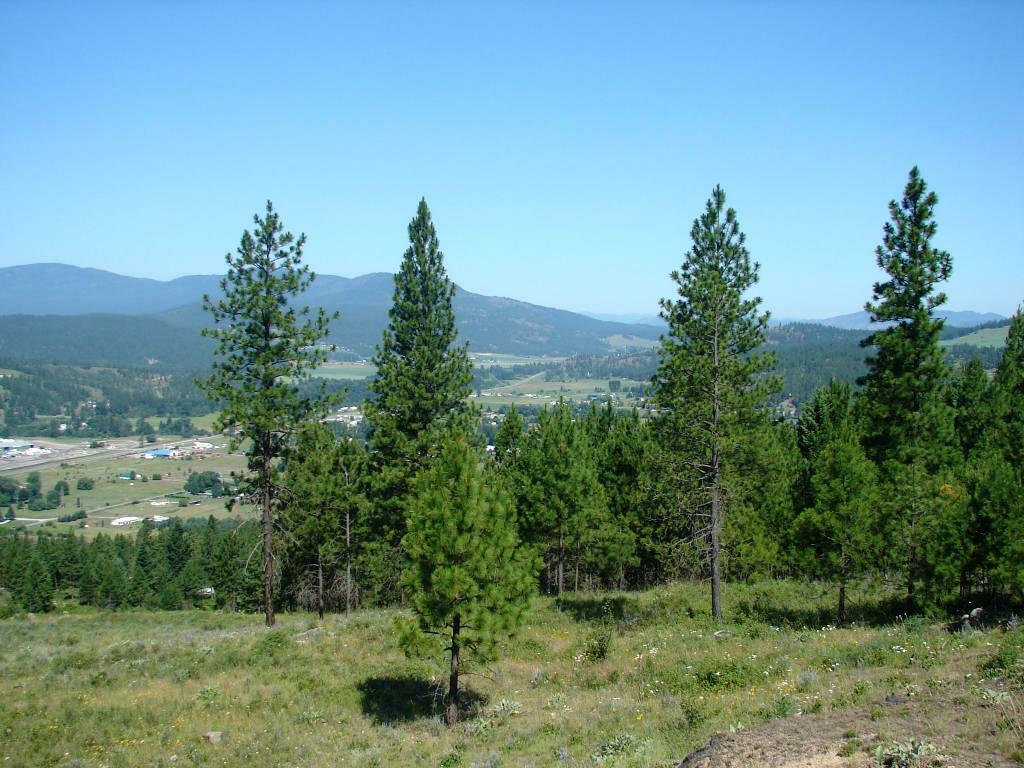 Land and views (photo 3)